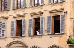 Perro en Florence Window Fotografía de archivo