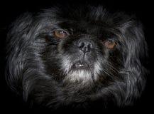 Perro en fondo negro imagenes de archivo