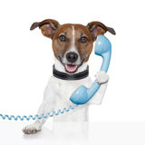 Perro en hablar del teléfono Imagen de archivo libre de regalías