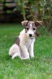 Perro en hierba Fotos de archivo