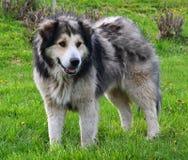 Perro en hierba verde Imagen de archivo libre de regalías