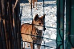 Perro en invierno imagen de archivo libre de regalías