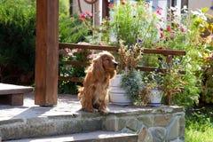 Perro en jardín Imágenes de archivo libres de regalías