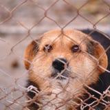 Perro en jaula fotos de archivo libres de regalías