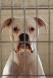 Perro en jaula Foto de archivo