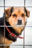 Perro en jaula Foto de archivo libre de regalías