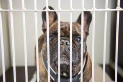 Perro en jaula Imagen de archivo libre de regalías