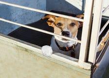 Perro en jaula del refugio Fotos de archivo libres de regalías