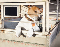 Perro en jaula del refugio Imagenes de archivo