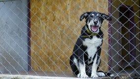 Perro en jaula en el refugio para animales almacen de video