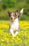Perro en la acción Imágenes de archivo libres de regalías
