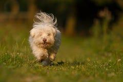 Perro en la acción Imagen de archivo libre de regalías