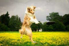 Perro en la acción Foto de archivo