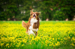 Perro en la acción Fotos de archivo libres de regalías
