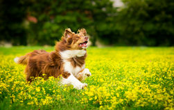 Perro en la acción Foto de archivo libre de regalías