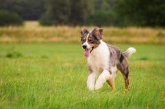 Perro en la acción Imagenes de archivo