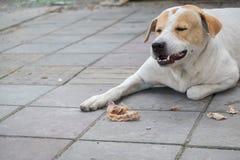 Perro en la acera Fotos de archivo libres de regalías