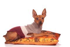 Perro en la almohadilla Fotos de archivo