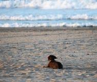 Perro en la arena de la playa y del fondo del mar imagenes de archivo