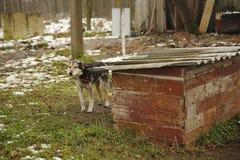 Perro en la cadena cerca de la cabina Fotos de archivo