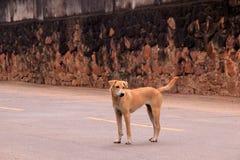Perro en la calle Fotos de archivo