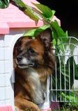 Perro en la casa de la marioneta Imagen de archivo libre de regalías