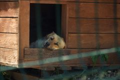 Perro en la caseta de perro Foto de archivo libre de regalías