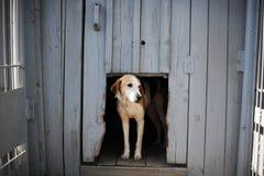 Perro en la caseta de perro Imagen de archivo