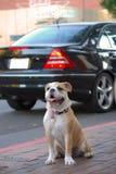 Perro en la ciudad Imagen de archivo