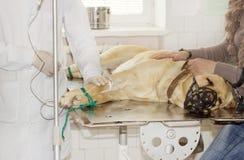 Perro en la clínica Foto de archivo libre de regalías