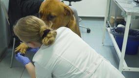Perro en la clínica veterinaria almacen de metraje de vídeo