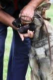 Perro en la competición foto de archivo libre de regalías
