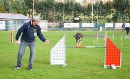 Perro en la competición de la agilidad que salta sobre obstáculo Foto de archivo