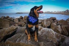 Perro en la costa con el mar imagenes de archivo