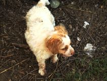 Perro en la desesperación Foto de archivo