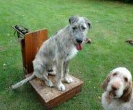 Perro en la escala Fotografía de archivo libre de regalías
