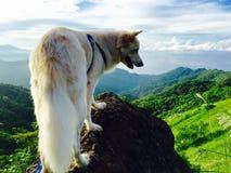 Perro en la extremidad del top de la roca en la montaña Fotografía de archivo