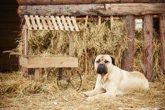 Perro en la granja Fotografía de archivo libre de regalías