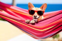 Perro en la hamaca Imágenes de archivo libres de regalías