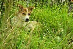 Perro en la hierba Imágenes de archivo libres de regalías