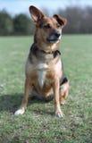 Perro en la hierba Fotografía de archivo libre de regalías