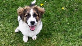 Perro en la hierba foto de archivo libre de regalías