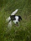 Perro en la hierba Fotografía de archivo