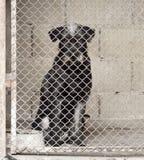 Perro en la jaula Foto de archivo libre de regalías
