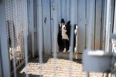 Perro en la jaula al aire libre Fotos de archivo