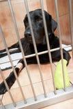 Perro en la jaula que se recupera de la lesión del pie Fotos de archivo libres de regalías