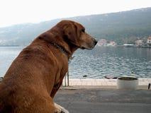 Perro en la línea de costa fotografía de archivo libre de regalías