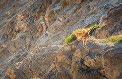 Perro en la montaña Foto de archivo