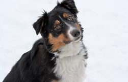 Perro en la nieve Fotografía de archivo libre de regalías