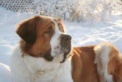 Perro en la nieve Imagenes de archivo
